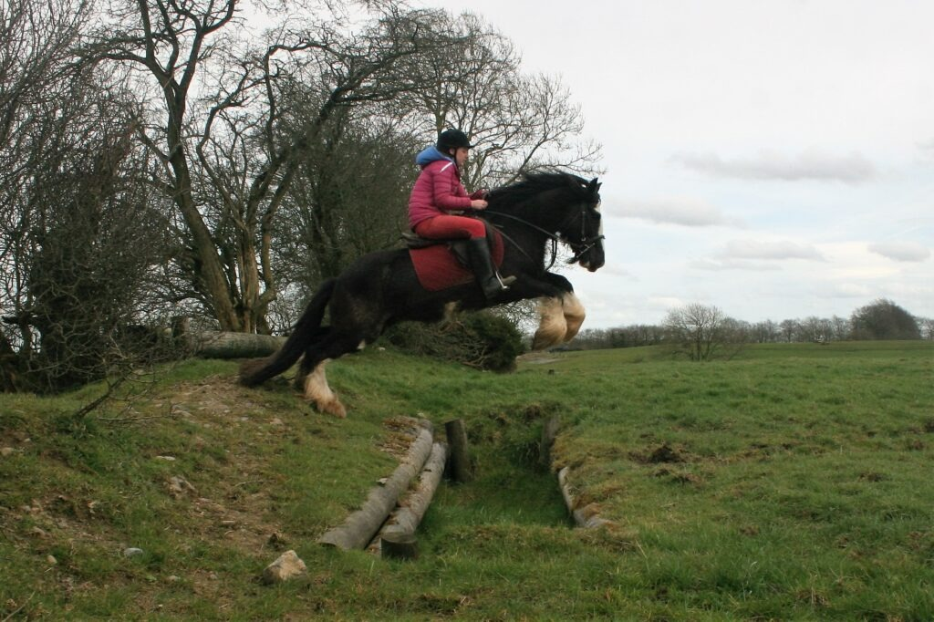 Irish cob cross country