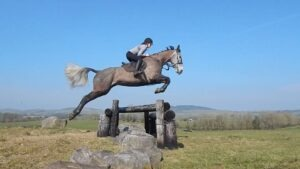 Irish hunter jumping