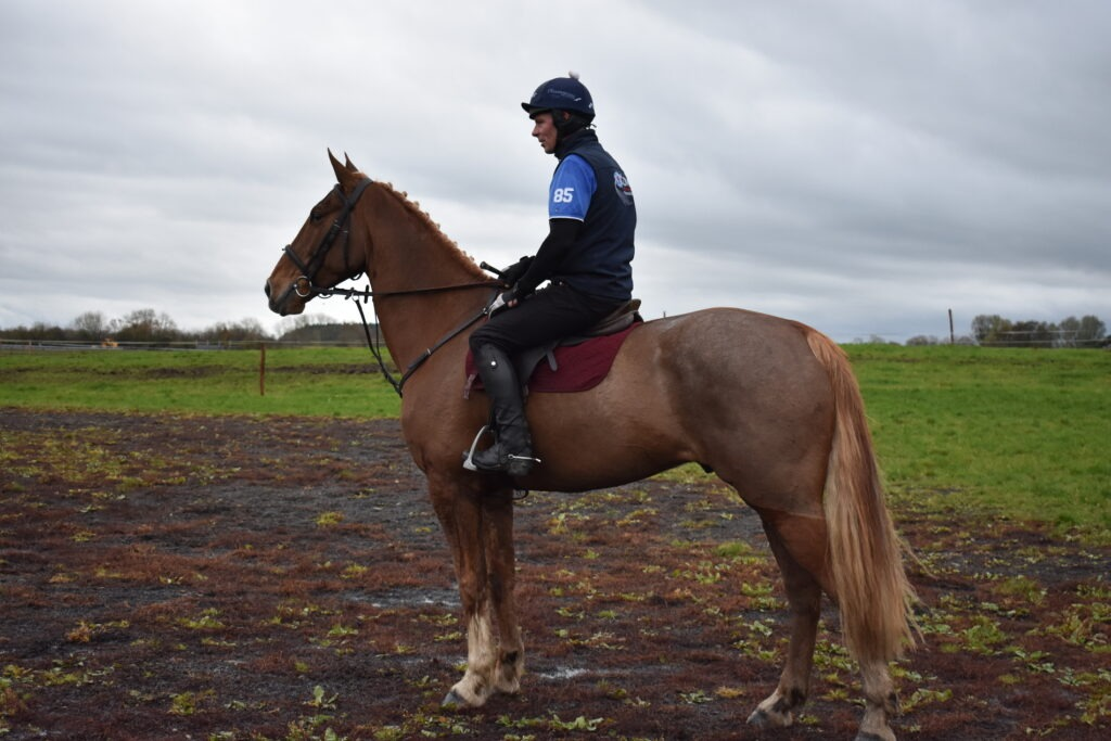 Irish Hunters for Sale – Cairnview Stud