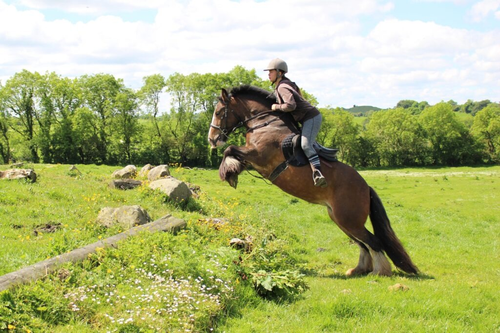 Irish Cobs For Sale Cairnview Stud